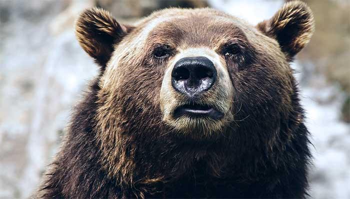 Björnmarknad på börsen