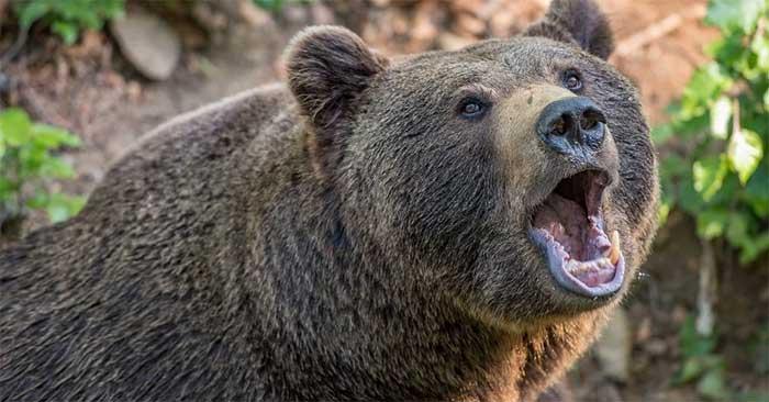 Vad är en björnmarknad?